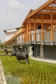 Thailandia pavilion, EXPO 2015 Milan — Stok fotoğraf