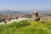Flowers on ramparts at Sarzanello fortress, Sarzana — Stock Photo