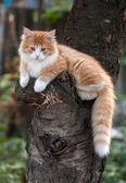 Kitten sitting in a tree  — ストック写真