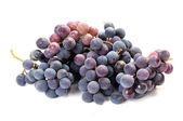 A bunch of black grapes on white — Stock Photo