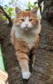 Kitten sitting in a tree  — Stock Photo