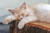 The cat is sleeping on a stump of a tree — Stock Photo