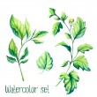 Vatercolor vector leaves set — Stock Vector #67445607