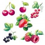 Berries set — Stock Vector #67445703
