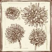 Hand drawn dahlia flowers vintage sketch — Stock Vector