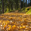 Fallen leaves in autumn forest — Stock Photo #56309167
