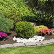 Blooming ornamental flower garden in spring — Zdjęcie stockowe #71082039