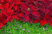 Background with colorful decorative leaves 2 — Stock fotografie