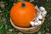 Pumpkins and garlic placed in a wicker basket — Stock Photo