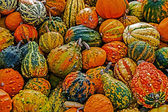 Mixed colorful pumpkins 1 — Stock Photo