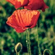 Old photo with poppies and chamomile 1 — Stock Photo #59971537