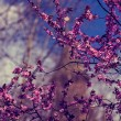 Natural drawing with cherry branches in blue light — Stockfoto #70176217