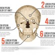 Human skull infographic, vector illustration — Stock Vector #55515193