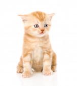 Pomarańczowy pręgowany kotek — Zdjęcie stockowe