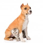 Kitten and puppy sitting together — Stock Photo