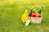 Vegetables and garden tools — Stock Photo