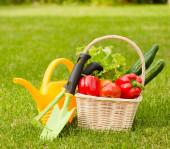 Zelenina v koši a zahradní nářadí — Stock fotografie