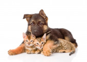 Puppy dog embracing little kittens. — Stock Photo