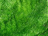 Fondo verde hierba — Foto de Stock