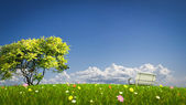 Bench on a grass field — Stock Photo