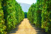 California Produce Farm — Stock Photo
