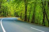 Scenic Forest Road — Stock Photo