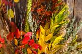 Colorful Fall Bouquet — Stock Photo