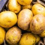 Idaho Potatoes — Stock Photo #62108105