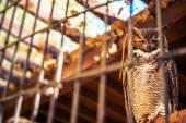 Poor Owl in Captivity — Stock Photo