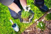 Gardener Replanting Flowers — Stock Photo