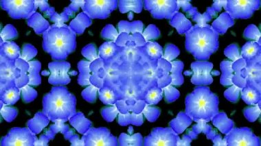 Blue flowers — Stock Video