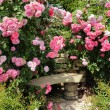 Pink roses. — Stock Photo #52450123