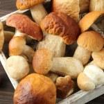Porcini mushrooms — Stock Photo #53987855