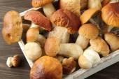 Porcini mushrooms — Stock Photo