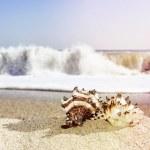 Shells on sandy beach in retro style — Stock Photo #60597715