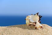 Shells on sandy beach. In the background of sea and sky — Stock Photo