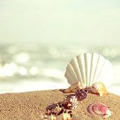Shells on sandy beach in retro style — Stock Photo