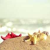 Seashells and starfish on a beach sand in retro style — Zdjęcie stockowe