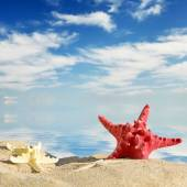 Aquatic background.Color starfishes on sandy beach, travel concept — Stock Photo