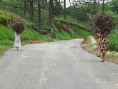 Women carrying brushwood — Stock Photo