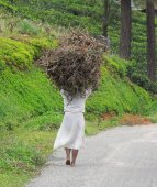 Woman carrying brushwood — Stock Photo