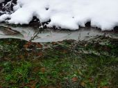Winter waters edge — Stock Photo