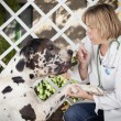 Close-up of blond female veterinarian and dog — Stock Photo #67633003