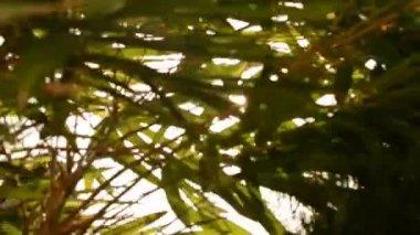 Sunshine Under The Tree — Stock Video