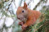 Young squirrel — Stock Photo