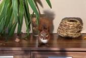 Little squirrel — Stock Photo