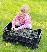 Girl picked grapes — Stock Photo