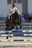 Horse jumping show — Stock Photo