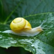 Snail in garden close up — Stock Photo #75474163
