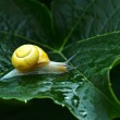 Snail in garden close up — Stock Photo #75474171